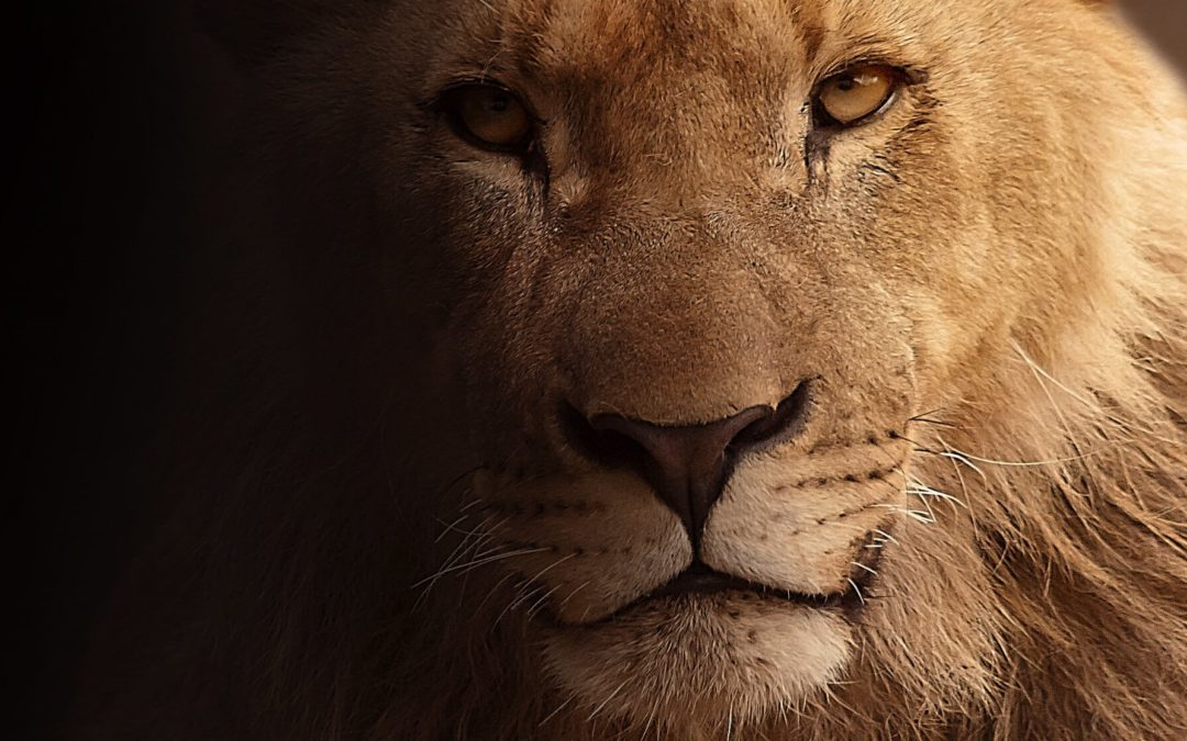 Think like a King If You Want to Become One